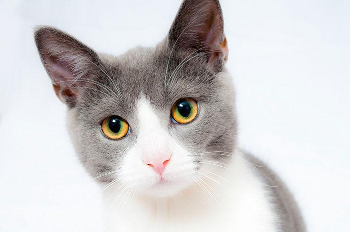 Jak wybrać dobrą karmę dla kota